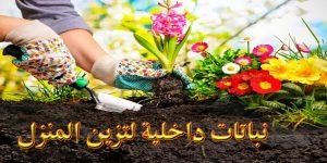 نباتات داخلية لتزين المنزل