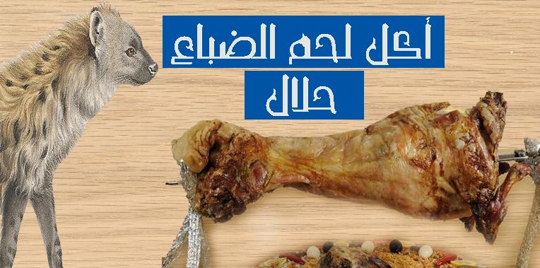 أكل لحم الضباع حلال